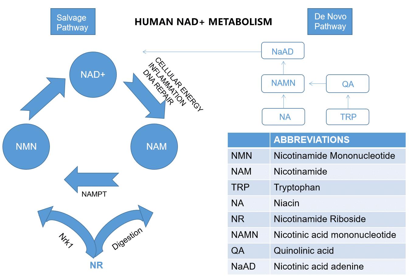 NMN Supplement Powder, NMN Powder For Anti-Aging